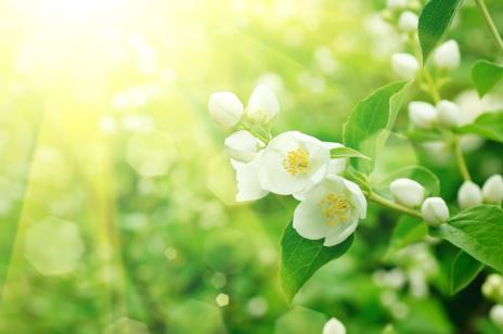 iStock_000026242389Small - Flowers resized.jpg